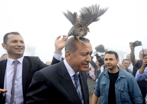 A grouse sits Turkish President Tayyip Erdogan's head as he visits a facility of the Forest and Water Management Ministry in Rize, Turkey, August 14, 2015. Turkey's nationalist opposition made clear on Friday it would not roll over and back a minority government, making President Tayyip Erdogan's aim of taking the country to a snap election with the ruling party in control look increasingly difficult. Talks on forming a grand coalition between the AK Party and the main opposition CHP broke down on Thursday, making an autumn election almost inevitable and leaving the ruling party having to turn to the nationalist MHP for support. REUTERS/Stringer NO ARCHIVES       TPX IMAGES OF THE DAY